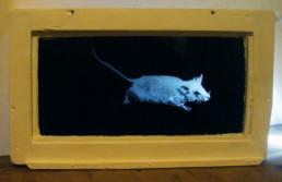 Judith Marin Souris Blanche fenêtre peinture acrylique sur verre