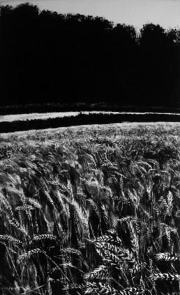 Judith Marin Champ de blé peinture vinylique et pigments noir et blanc sur toile